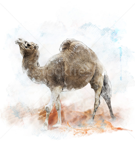 акварель изображение верблюда цифровой Живопись природы Сток-фото © saddako2