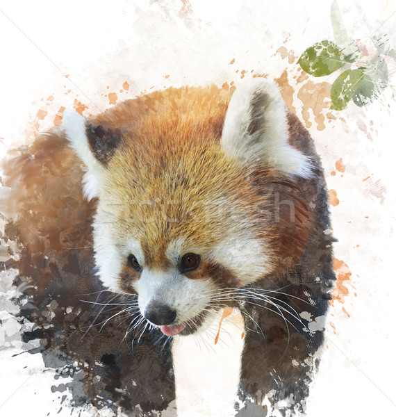 Stock photo: Watercolor Image Of  Red Panda