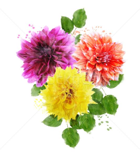 Watercolor Image Of  Dahlia Flowers Stock photo © saddako2