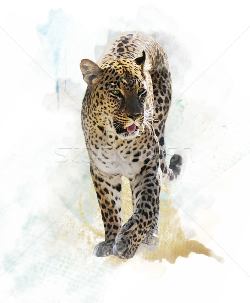 Watercolor Image Of  Leopard  Stock photo © saddako2