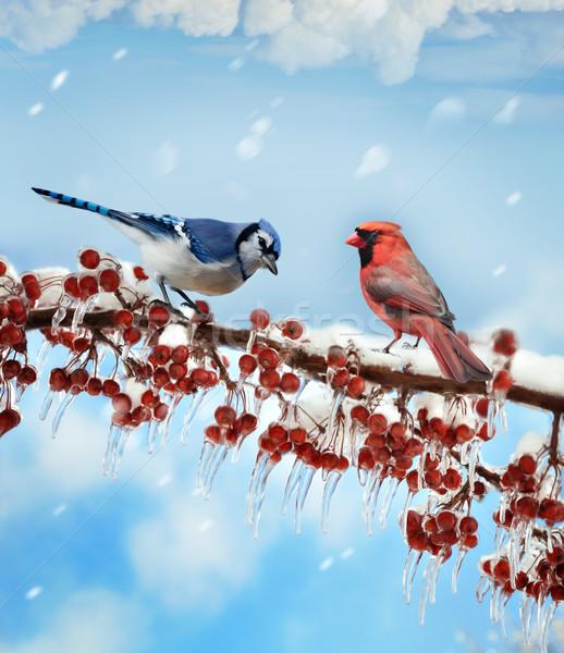Uccelli inverno digitale pittura nubi neve Foto d'archivio © saddako2
