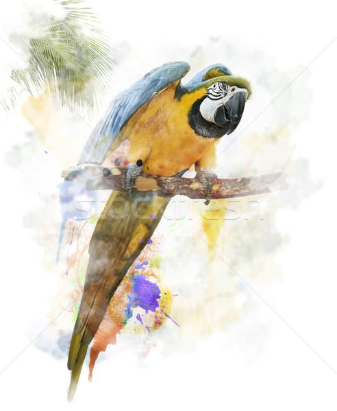 Suluboya Görüntü Papağan Dijital Boyama Renkli Stok