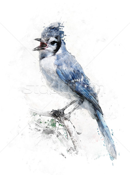 Watercolor Image Of Blue Jay Stock photo © saddako2