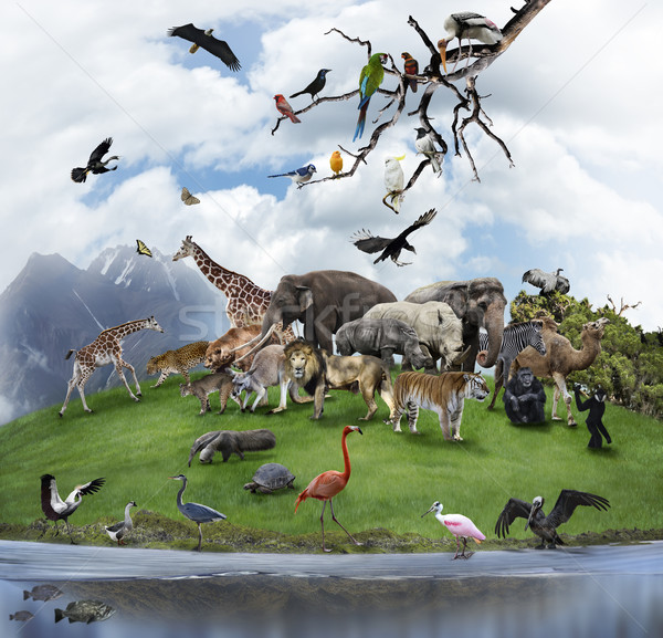 A Collage Of Wild Animals And Birds  Stock photo © saddako2