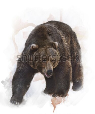 Watercolor Image Of  Grizzly Bear Stock photo © saddako2