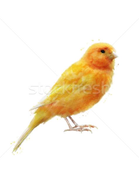 Acquerello immagine giallo uccello digitale pittura Foto d'archivio © saddako2