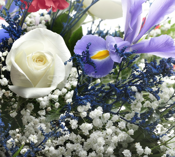 çiçekler renkli çiçek gül arka plan Stok fotoğraf © saddako2