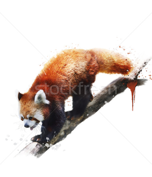 Acquerello immagine rosso panda digitale pittura Foto d'archivio © saddako2