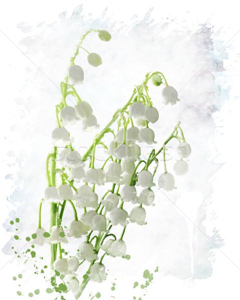 Giglio valle acquerello digitale pittura primavera Foto d'archivio © saddako2