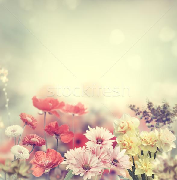 Colorato fiori variazione fiori di primavera fiore primavera Foto d'archivio © saddako2