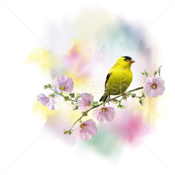 yellow bird watercolor Stock photo © saddako2