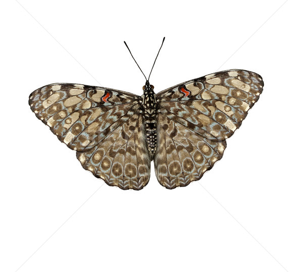 tropical butterfly Stock photo © saddako2