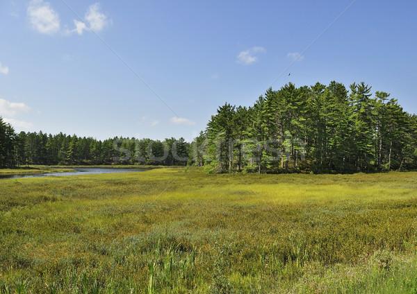 Estate panorama piccolo lago foresta albero Foto d'archivio © saddako2