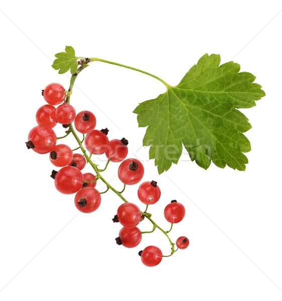 Rojo grosella hojas aislado blanco naturaleza Foto stock © saddako2