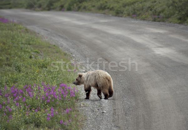 Park Alaska weg natuur reizen Stockfoto © saddako2