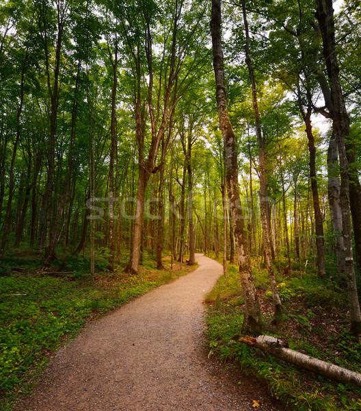 ösvény út napos erdő nyár növények Stock fotó © saddako2
