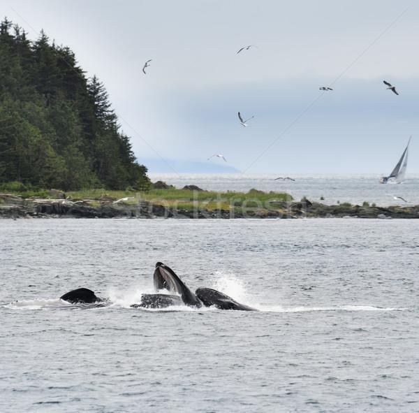 Etetés buborék Alaszka víz természet tenger Stock fotó © saddako2