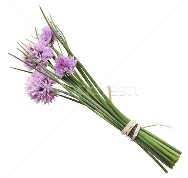 Snidling virágok izolált fehér növény friss Stock fotó © saddako2