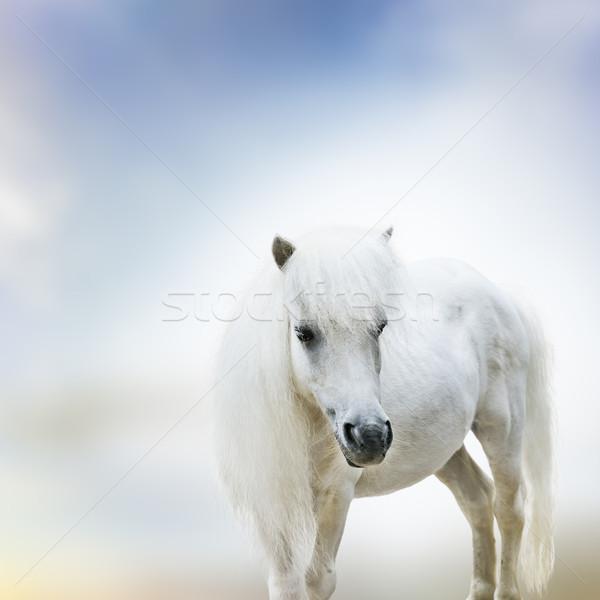 白 ポニー 肖像 かわいい ストックフォト © saddako2