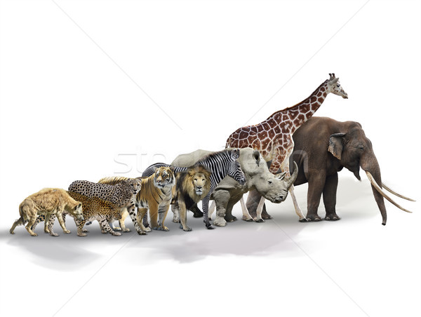 Set of African Animals Stock photo © saddako2