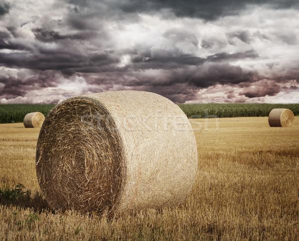 соломы области небе пейзаж лет пшеницы Сток-фото © saddako2