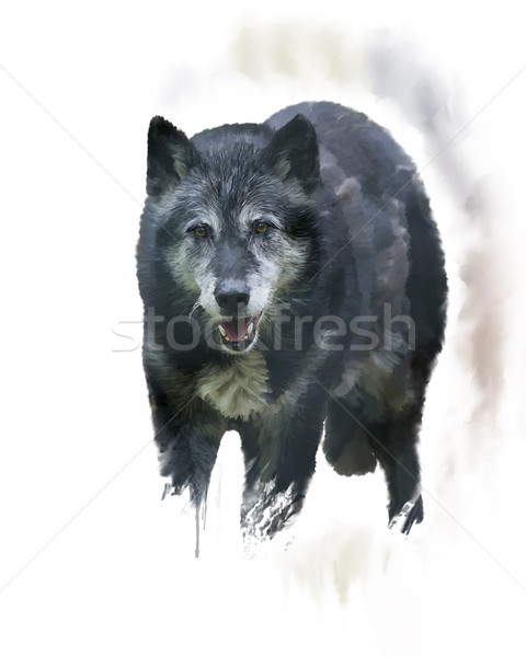 Madeira lobo aquarela digital pintura retrato Foto stock © saddako2