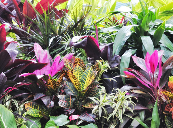 Tropical Plants Stock photo © saddako2