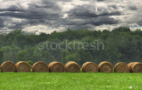 Széna mező esős nap tájkép nyár Stock fotó © saddako2