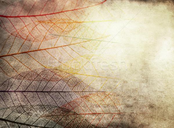 Grunge sötét grunge textúra csontváz levelek textúra Stock fotó © saddako2