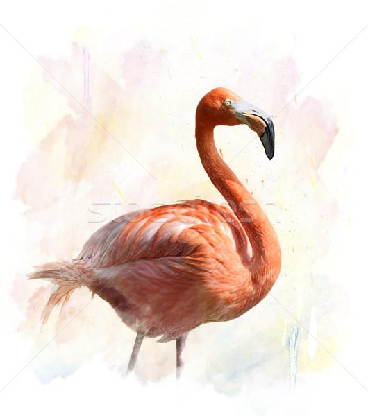 Flamingo Suluboya Ornek Dijital Boyama Kus Stok