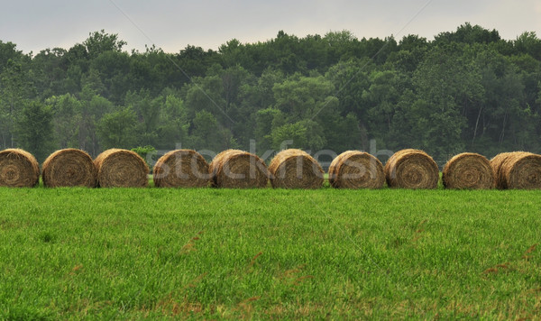 Foin domaine pluies jour été bleu Photo stock © saddako2