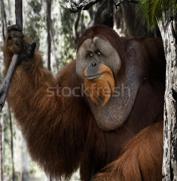 Orangutan portre orman ağaç doğa Stok fotoğraf © saddako2