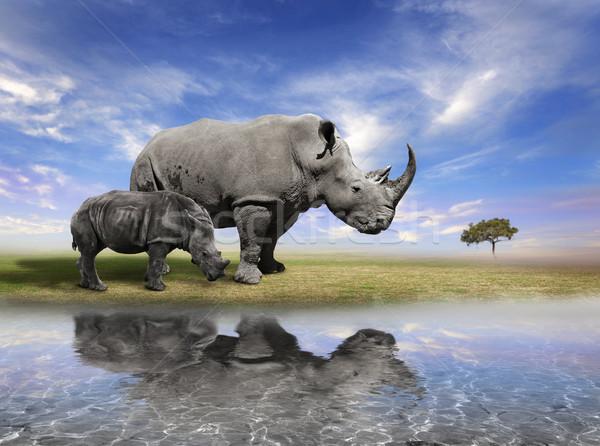 Mother Rhino With Calf  Stock photo © saddako2
