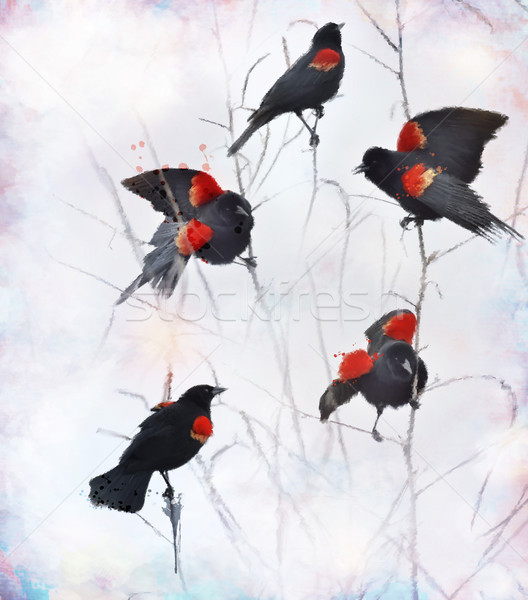 Red Winged Blackbirds Stock photo © saddako2