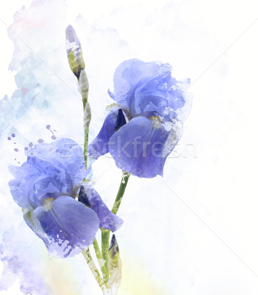 Iris Flowers Watercolor Stock photo © saddako2