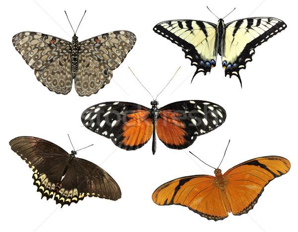 Foto stock: Tropical · borboletas · isolado · branco · borboleta · inseto