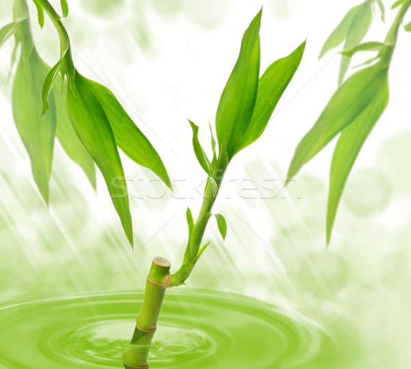 Bambù acqua abstract foglia verde vita Foto d'archivio © saddako2