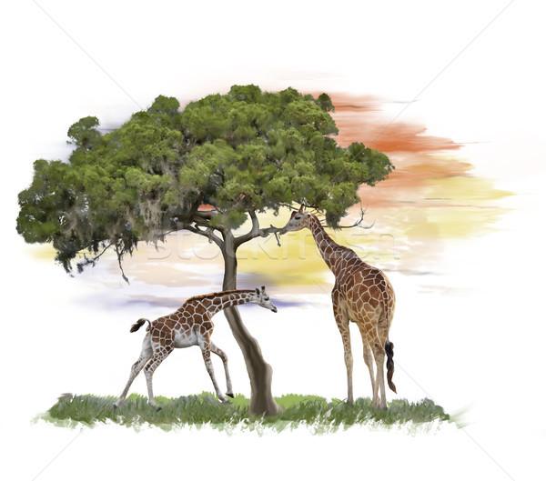 Giraffes near a tree watercolor Stock photo © saddako2