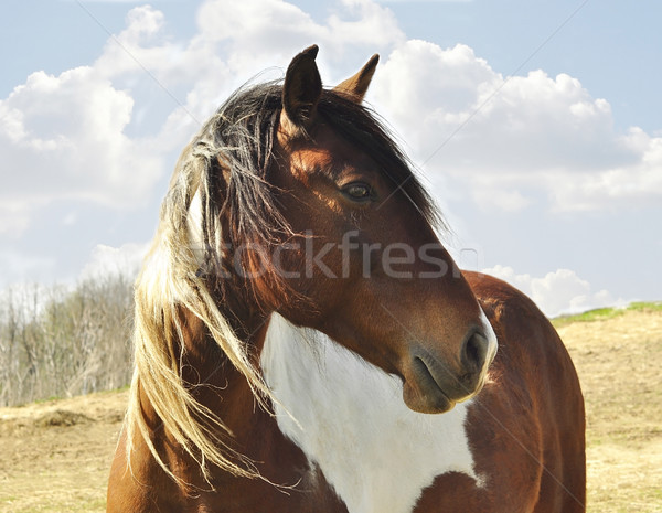 horse Stock photo © saddako2
