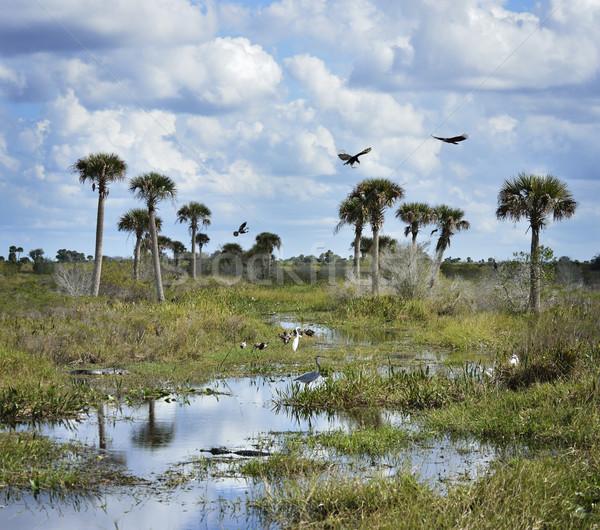 Florida Wetlands Scenic View Stock photo © saddako2