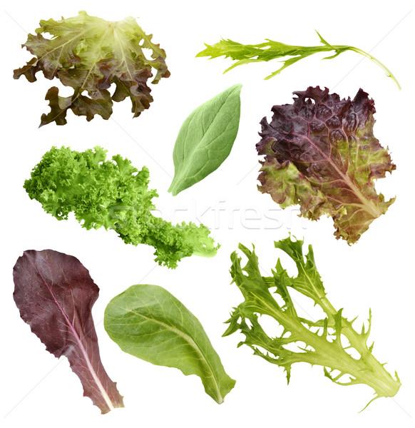 Salad Leaves Collection Stock photo © saddako2