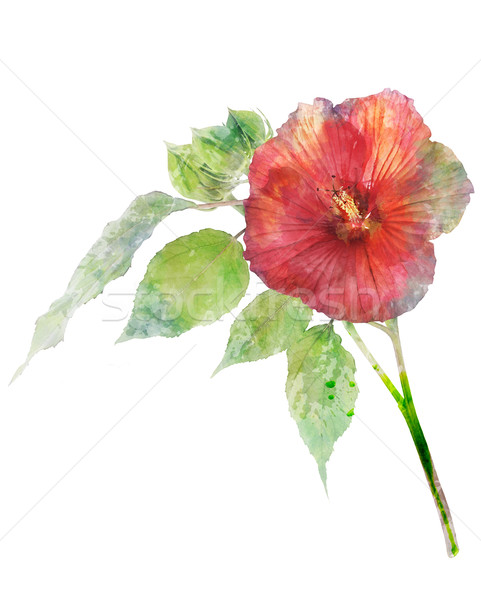 Watercolor Image Of Hibiscus Flower Stock photo © saddako2