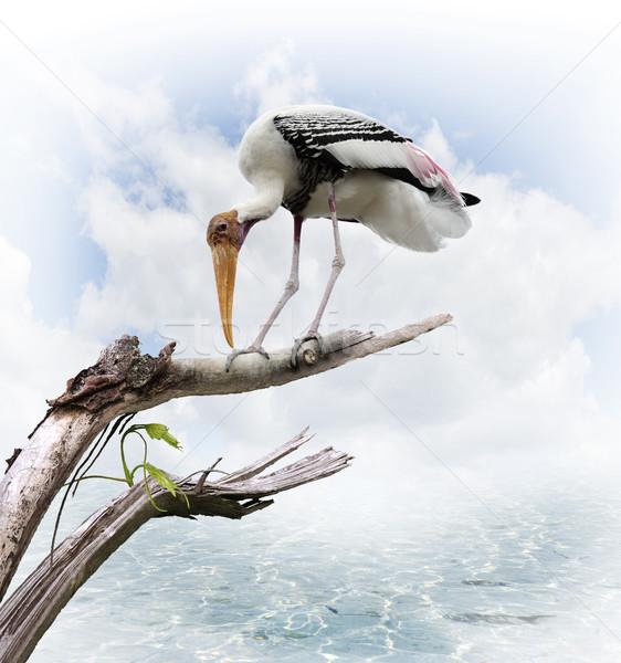 The Painted Stork (Mycteria leucocephala) Stock photo © saddako2