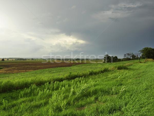 Lluvioso día verano paisaje tiempo textura Foto stock © saddako2