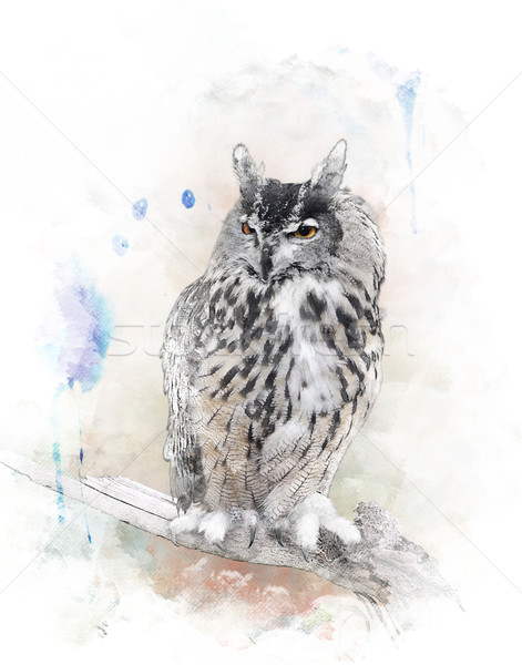 Watercolor Image Of  Owl Stock photo © saddako2