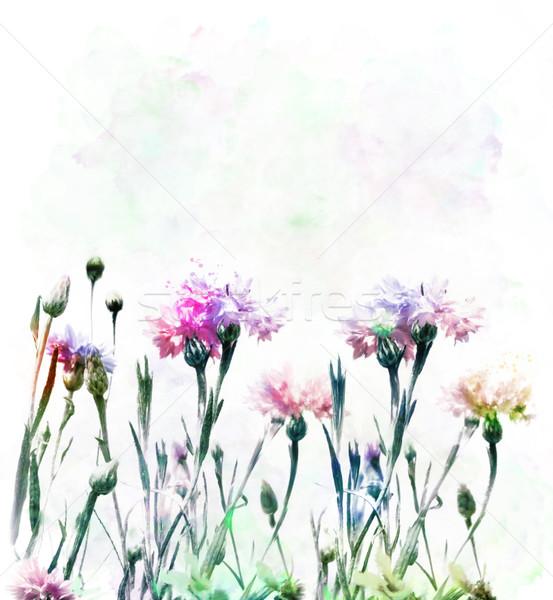 Akwarela cyfrowe malarstwo kolorowy kwiat sztuki Zdjęcia stock © saddako2