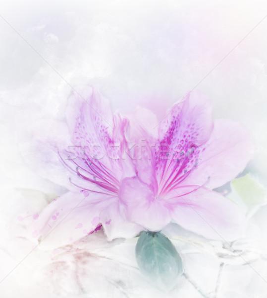 Roze azalea aquarel digitale schilderij voorjaar Stockfoto © saddako2