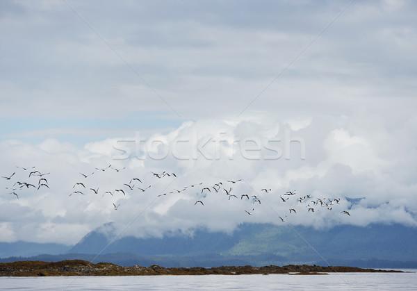 Meeuwen vlucht Alaska landschap zee Stockfoto © saddako2