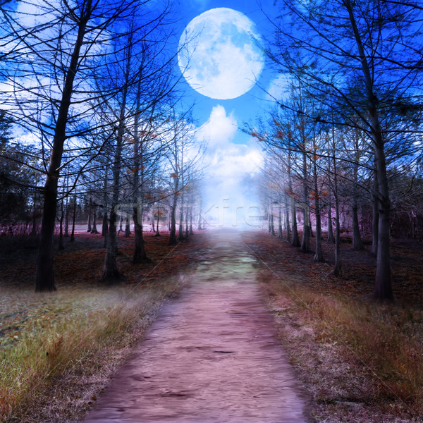 Full Moon And Woods Stock photo © saddako2