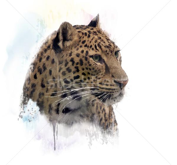 ヒョウ 肖像 水彩画 デジタル 絵画 頭 ストックフォト © saddako2